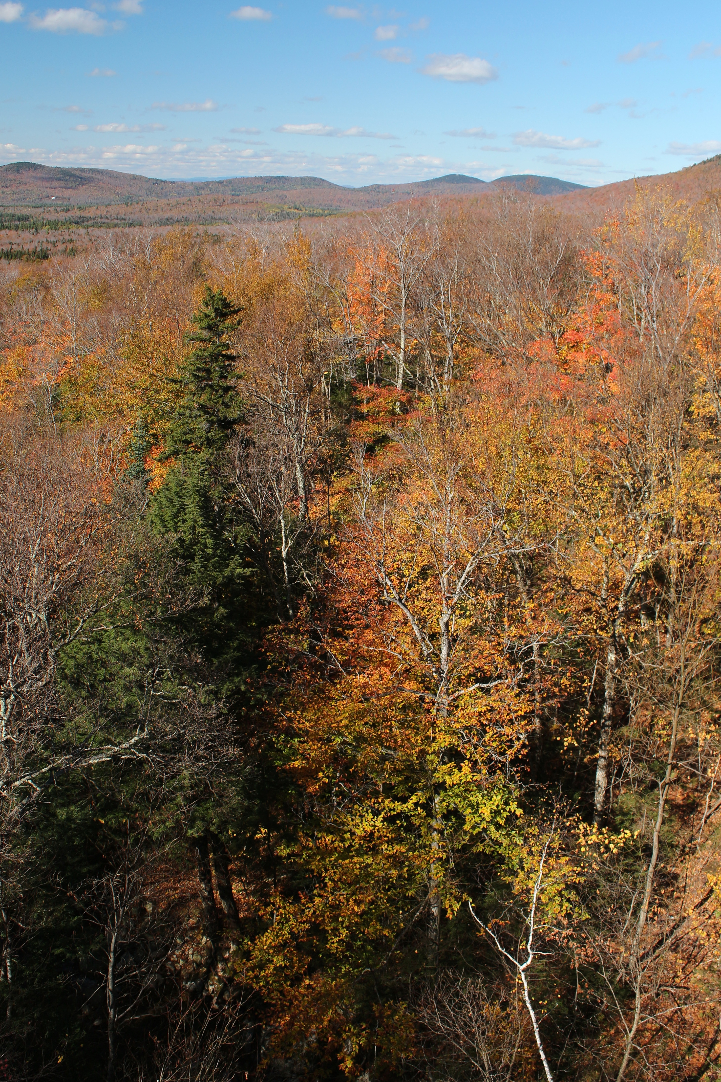 View_from_Recreational_Trail,_Franconia_-_panoramio_(1)